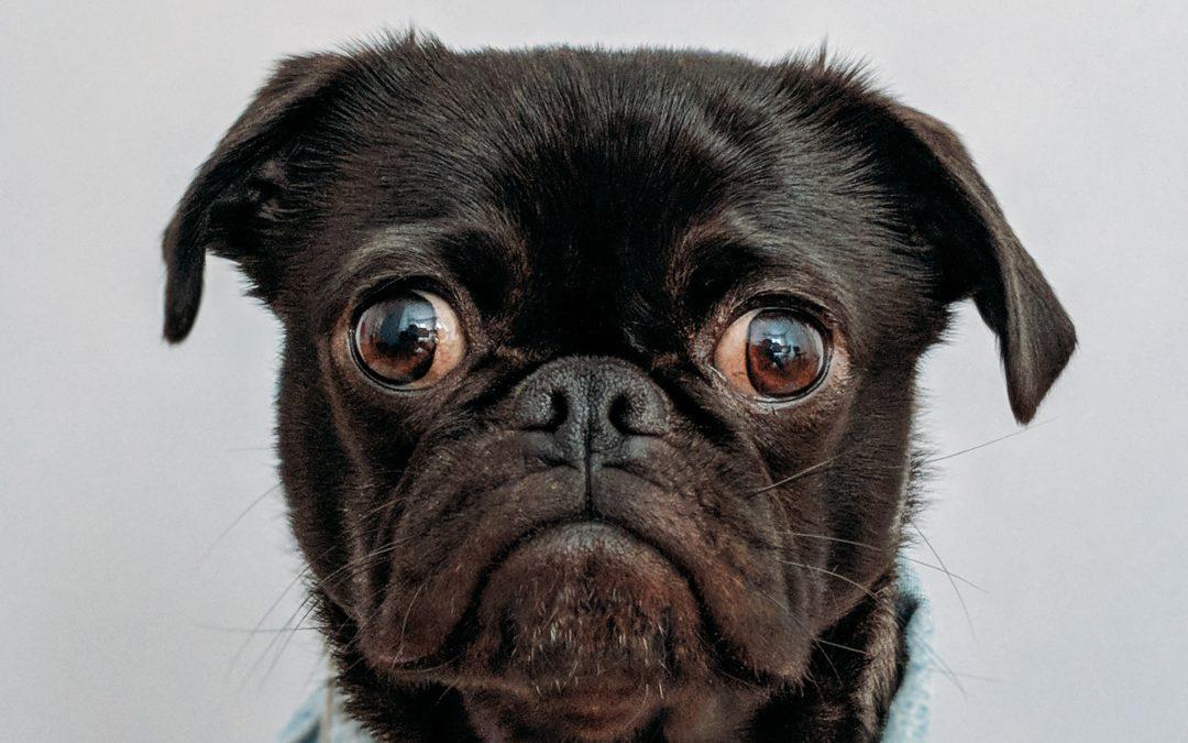cagnolino con espressione perplessa e allarmata